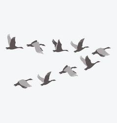 a flock ducks a cartoon flock birds vector image