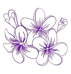 Beautiful Hand Drawn Plumeria Flowers vector