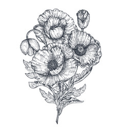 floral composition hand drawn poppy vector image