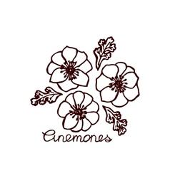 Handsketched bouquet of anemones vector