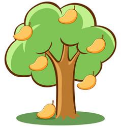 Mango tree on white background vector