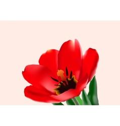 The tulip vector
