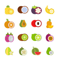 tropical fruits in style vector image