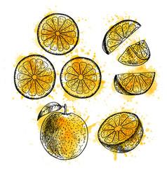 watercolor hand drawn set of orange sketch vector image