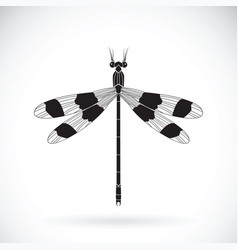 a dragonflies orolestes octomaculatus on white vector image