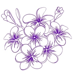 Beautiful Hand Drawn Plumeria Flowers vector
