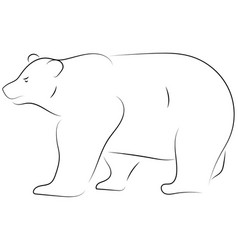 black line bear on white background hand drawn vector image