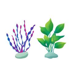 Seaweed types set plants vector