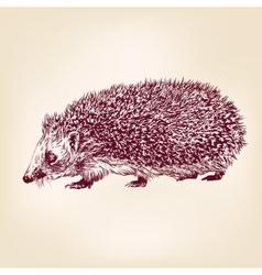 hedgehog hand drawn llustration realistic sketch vector image vector image
