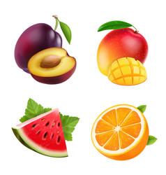 fruits orange plum watermelon and mango vector image vector image