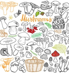 Mushrooms sketch doodles hand drawn set Different vector image vector image