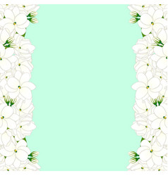 Arabian jasmine border on green mint background vector
