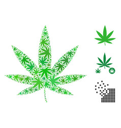 Cannabis mosaic of hemp leaves vector