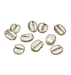 coffee beans sketch drink vintage vector image