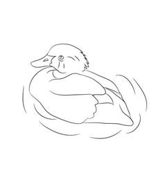 duck lines vector image
