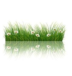 Fresh grass background vector image