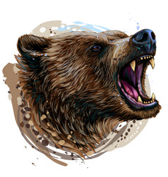 growling bear color portrait a angry bear vector image