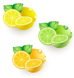 Ripe citrus vector