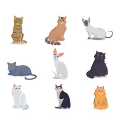 collection cats of different breeds vector image