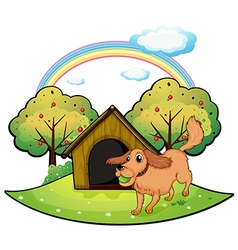 A dog playing outside the doghouse near the apple vector image