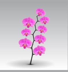 Branch flowers of the orchid pink vector