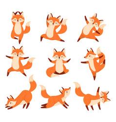 Cartoon fox in yoga poses healthy gymnastics vector