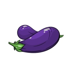 eggplant on white background vector image