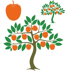 Persimmon tree vector