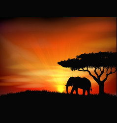Sunset background with animal elephant vector image