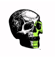skull sketch hand draw pen ink relaxed vector image