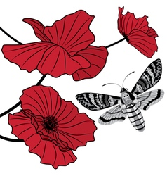 moth and red poppy vector image