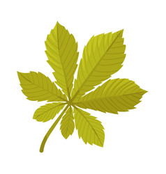 Chestnut leaf on a white vector