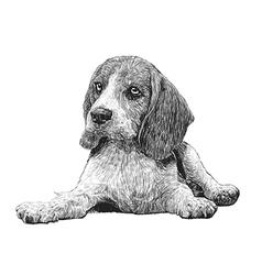 Dog 13 vector