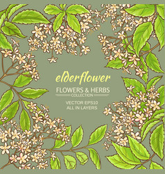 elderflower frame vector image