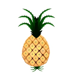 Fresh Organic Pineapple on A White Background vector image