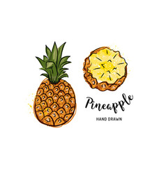 Pineapple fruit graphic drawing watercolor vector