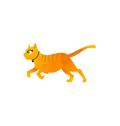 Cartoon cat animal rinning isolated vector