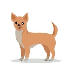 Chihuahua Dog Breed Flat Design vector