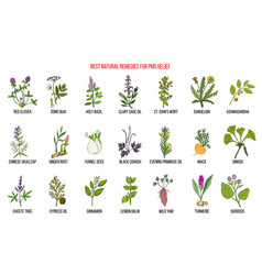 Herbal remedies for pms premenstrual syndrome vector