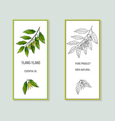 ylang-ylang essential oil label vector image
