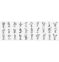 blooming plants hand drawn doodle set vector image