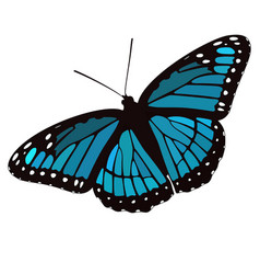 Blue winged butterfly vector