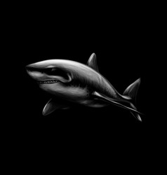 great white shark on a black background vector image
