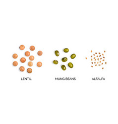 Realistic 3d of legumes collection vector