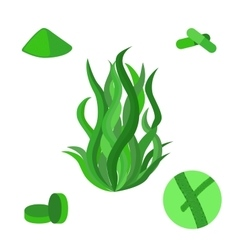 Set of spirulina sea weed algae in flat vector