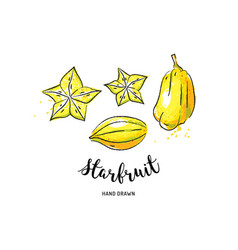 Starfruit graphic drawing exotic fruit watercolor vector
