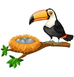 Toucan and eggs in nest vector image