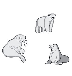 northern animals walrus white bear and seal vector image
