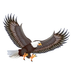 mighty predator eagle in flight isolated on a whi vector image vector image
