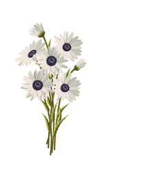 beautiful white daisies on white background vector image